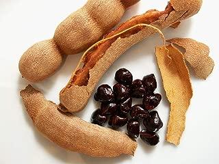 25 Seeds of Tamarindus Indica,Indian tamerint,Tamarind Tree Seeds for Sowing. Soak Seeds to Speed up Germination.