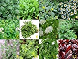 12 Arten - Schönes Kräuter Set - 12 Tütchen -