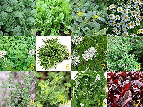 12 Arten - Schönes Kräuter Set - 12 Tütchen - 12000 Samen
