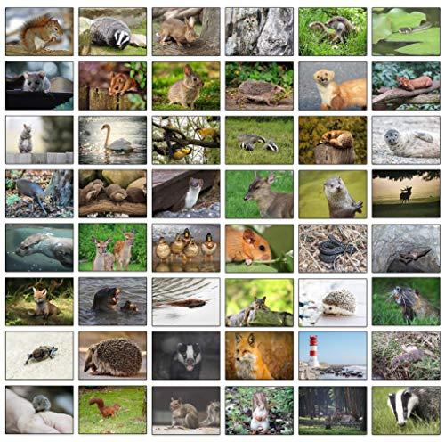 48 Deutsche Wildtier-Grußkarten aus Recyclingpapier.…
