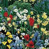 60 Bulbs Pack,Spring Garden Mixed - 20 Tulip Mix, 20 Allium Mix,10 Crocus Mix,10 iris,Immediate Shipping