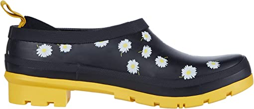 Black Daisy