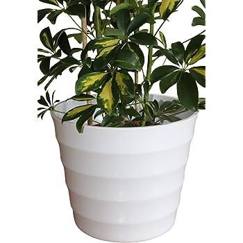 Piante Da Appartamento Amazon.Qualita Vaso Per Piante In Plastica Rigida Per Per Lavori Di
