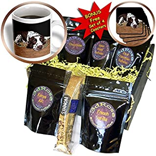 3dRose cgb_807_1 English Springer Spaniel - Coffee Gift Basket, Multicolor