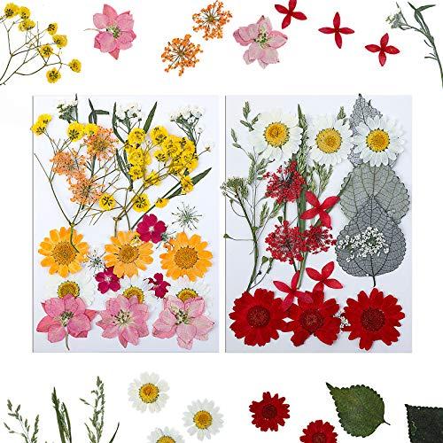 MWOOT 48 Piezas Flores Secas Naturales, Flores Prensadas para Hacer Diseños DIY, Decoración Hojas Prensadas para Marca Páginas Cuadros Velas Colgantes Resina, Manualidades Flores Blanco Rojo Amarillo