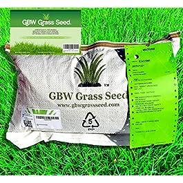 1kg de Graine d'Herbe de Qualité Premium couvre 35m² – Graine de Gazon à Croissance Rapide et Résistante à l'Usure…