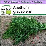 SAFLAX - Ecológico - Eneldo - 700 semillas - Anethum graveolens