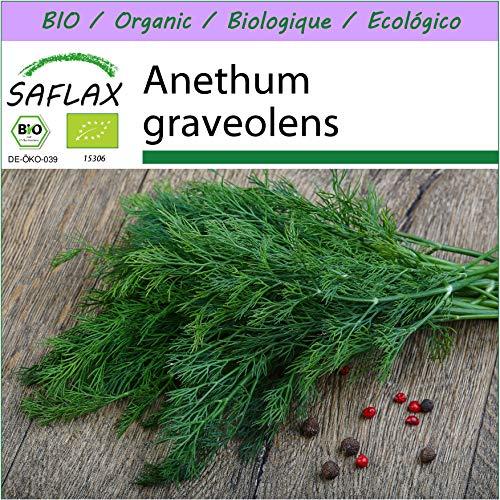 SAFLAX - BIO - Aneth - 700 graines - Anethum graveolens