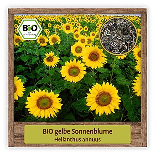 BIO gelbe Sonnenblume Samen Sommerblume (Helianthus annuus) Blumensamen Gründüngungs- & Bienenpflanze