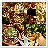 LIHAO 15pcs Kit d'outils de Jardinage Mini pour Bonsaï, Succulentes, Plantes en Pot #3