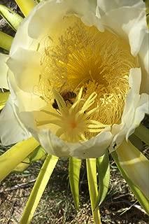 epiphyllum colors