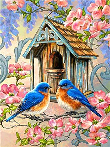 Dolomq DIY Malen Nach Zahlen Ölgemälde Vorgedruckt Leinwand Geschenk Für Erwachsene Kinder Home Haus Dekor Vogelhaus