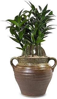 Dahlia Ceramic Vertical Wall Hanging Succulent Planter Flower Pot, Style 3