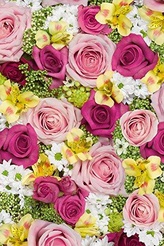 Stewo 2528697528 Geschenkpapier Carmen, Rolle im Format, 70 x 200 cm, rosa