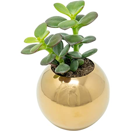 Desk planter Indoor Planter Succulent Planter Concrete Gold Filigree Air Plant Holder,Modern Metallic planter,Cactus Planter,Cactus Decor