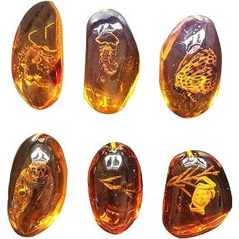 Fósil ámbar con insecto Muestras de piedra Colección de muestras Decoraciones para el hogar Cristal Cristal ovalado, surtido, 1 pieza: Amazon.es: Hogar