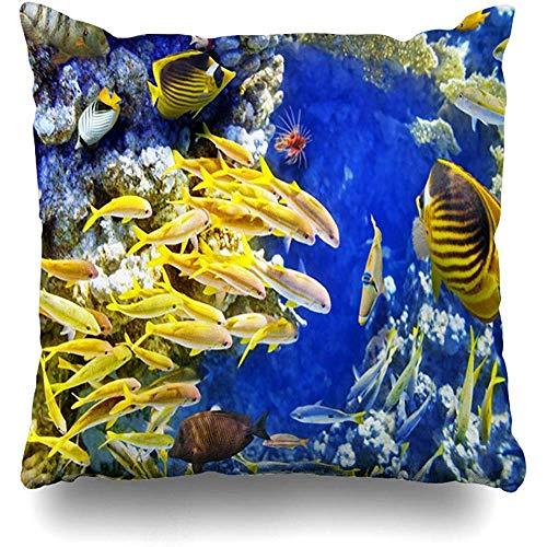 Doble Cojines Fundas 18' Pez Rojo caribeño Maravilloso Mundo Submarino Laguna Corales Buceo Tropical Naturaleza Jardín Bajío Funda de Almohada Suave para la Piel