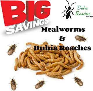 Dubia Roaches 100 Small