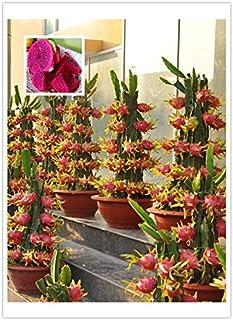 Paquete original, 15 semillas / paquete, Pitaya rojo dentro