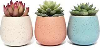 Succulent Planter Pot - Set of 3 - Assorted White Blue and Pink Ceramic Decorative Small Flower Plant Pot with Drainage - Home Office Desk Garden Mini Cactus Pot Indoor Decoration