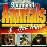 Animals Backround Music