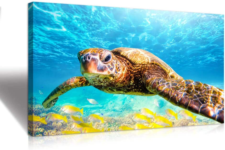 Marine theme style Sales for sale light blue wall turtle decoration sea yellow 1 year warranty