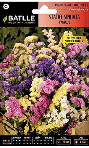 Semillas de Flores - Statice Sinuata variado - Batlle