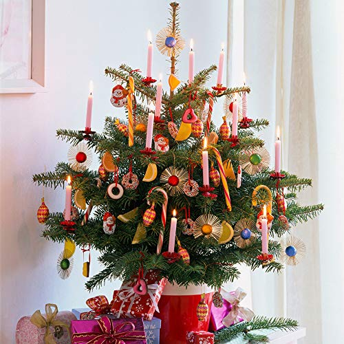 Living Pot Grown Nordmann Christmas Tree 80-100cm Tall