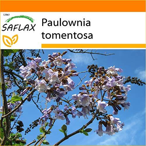 SAFLAX - Jardin dans le sac - Arbre impérial - 200 graines - Paulownia tomentosa