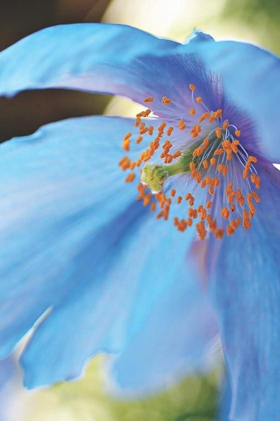 追い出すジーンズ追い出すBlue Poppy: Journal, Notebook, or Diary - Blank lined, 6 x 9 inches, 150 pages (Floral Series)