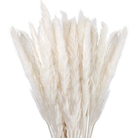 Hearkey Hierba de Pampas Natural Flores Secas, 30 Tallos de Pampas Grass de 45 cm de Alto, Phragmites Communis Pequeña Secada para la Decoración del Hogar Boda Fotografía Salón Hote Jardín Jarrones