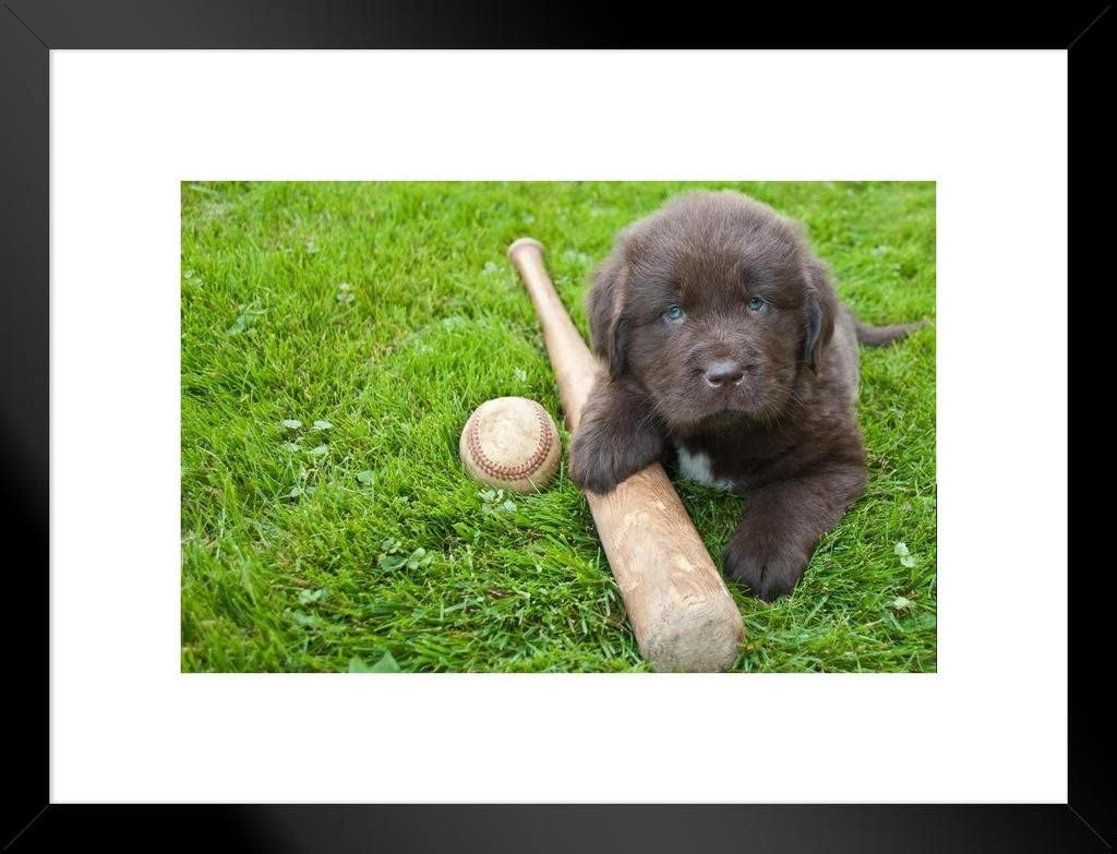 Play Ball Baseball Bat Brand Cheap Sale Venue with Max 57% OFF Puppy Fram Matted Newfoundland Photo