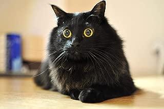 Best cat puzzles diy Reviews