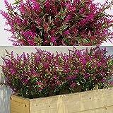 12 Manojos Arbustos Artificiales Lavanda Verde Artificial Flores Artificiales Plantas Resistentes a Rayos UV de Exterior para Arreglo Floral, Centro de Mesa, Decoración Jardín (Fucsia)