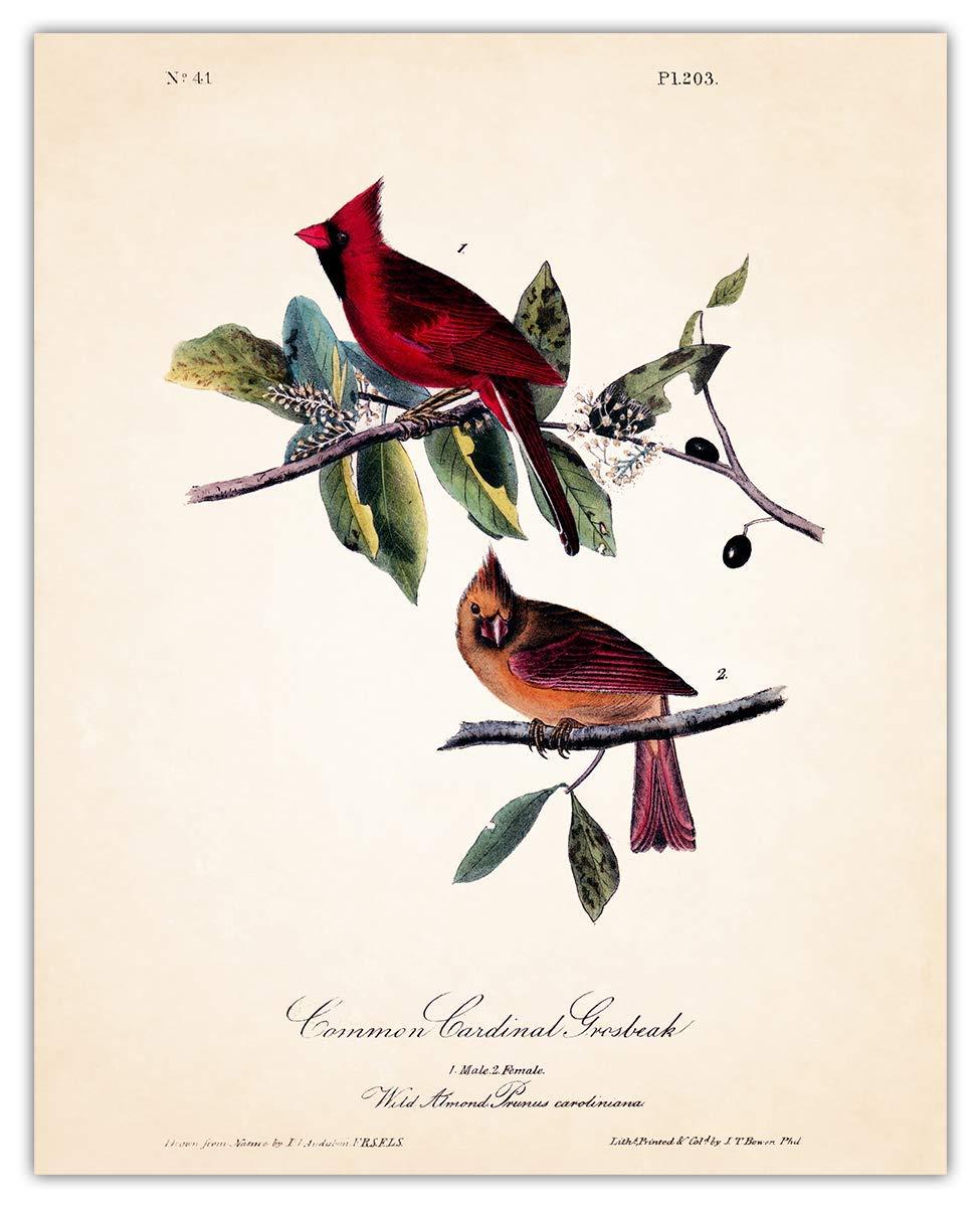 Vintage Cardinals Wall favorite Art Print Max 74% OFF - 8x10 Unframed Photo Gr Make