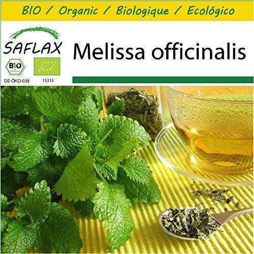 SAFLAX - Kit de culture - BIO - Mélisse officinale - 1000 graines - Avec mini-serre, substrat de culture et 2 pots - Melissa officinalis