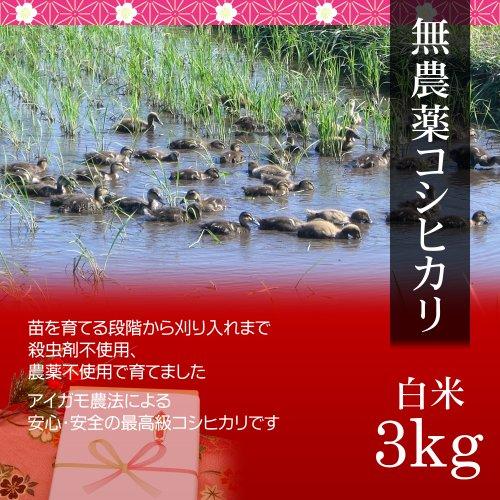 【バレンタイン プレゼント・チョコレート付】無農薬米コシヒカリ 3kg 白米・贈答箱入り/ギフトにアイガモ農法で育てた安全な新潟米