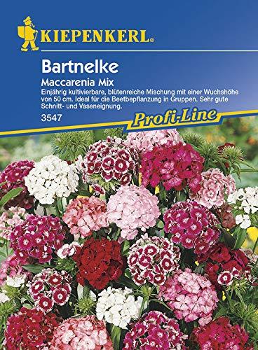 Kiepenkerl 3547 Bartnelke Maccarenia Mix (Bartnelkensamen)