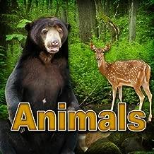 Cougar - Wild Growl Animals Sound