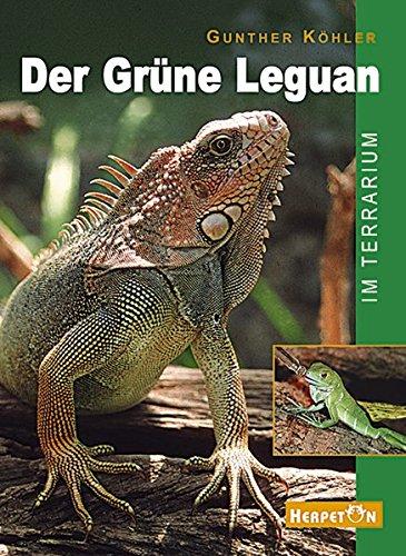 Der Grüne Leguan im Terrarium: Pflege und Zucht