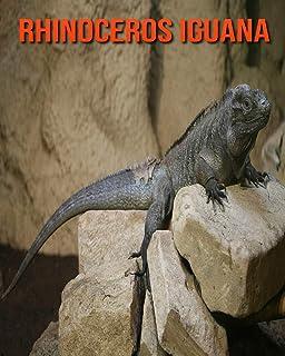 Rhinoceros Iguana: Amazing Facts about Rhinoceros Iguana