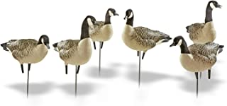 Avian-X Painted Active Lesser Goose Decoys 6 Pack