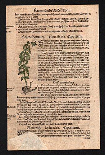 Holzwurz Schwalbenwurz Weiderich herbs herbal Kräuter Kräuterbuch Lonicer