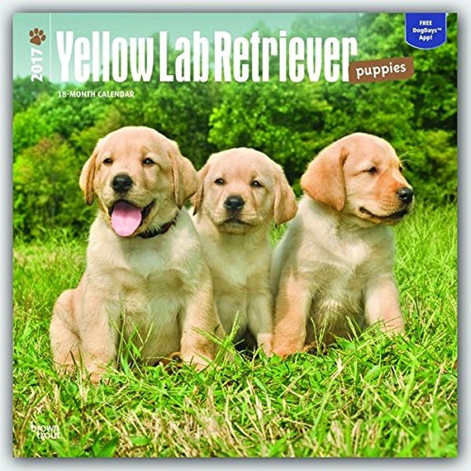 レシピスケート排気Labrador Retriever Puppies, Yellow 2017 Calendar
