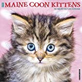 MAINE COON KITTENS 2020 WALL C