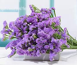 Best dry flower technology Reviews
