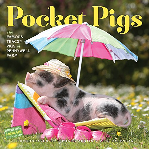 Pocket Pigs Wall Calendar 2016: The Famous Teacup Pigs of Pennywell Farm
