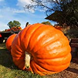Inovey 10Pcs/Pack Gigante Semilla De Calabaza Grande Calabaza Ornamental Tierra Vegetal Semilla Decoración De Halloween