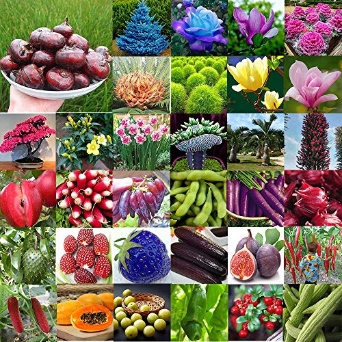 Portal Cool 12 Zimtbaum Samen 20 Stücke: Multi-Style Hausgarten Seltene Riesensamen Gemüse Blume Obst Samen Pflanzendekor