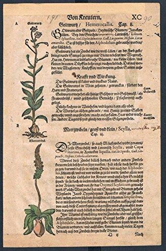Taglilien Meerzwiebel herbal Kräuter Kräuterbuch Lonicer Holzschnitt